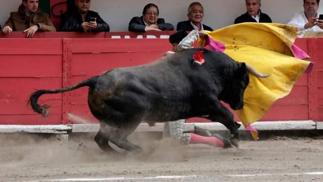 Corridas de toros en CDMX; presentan iniciativa prohibirlas