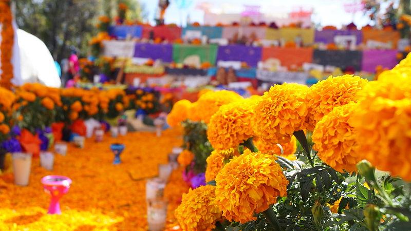 flores-cempasuchil-cuidados-significado-origen-nombre