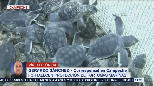 Fortalecen Protección Tortugas Marinas Campeche
