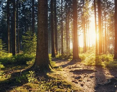 Captan en video sorprendente momento en que un bosque respira