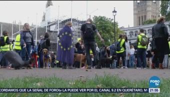 Guareferendum Contra El Brexit Más De 3 Mil Perros Reino Unido Unión Europea