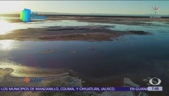 Lagunas altiplánicas, fuente de vida en el desierto de Atacama
