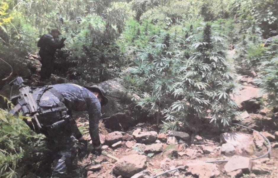 Legalización de drogas puede disminuir la violencia