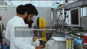 Nanotecnología Aumentar Tiempo Conservación Alimentos