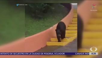 Oso sorprende a estudiantes de la Universidad de Nuevo León