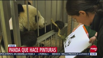 Panda pintor causa furor en Viena