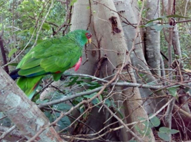 Profepa integra a su hábitat a 11 pericos asegurados