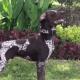 PGR recibe 30 perros que buscan drogas y restos humanos