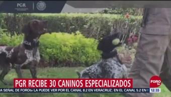 PGR recibe 30 caninos especializados en búsqueda de narcóticos