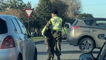 Perro-callejero-Policia-transito-juego-Chile