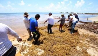 Sargazo en Cancún; recolectan 150 mil toneladas en 4 meses