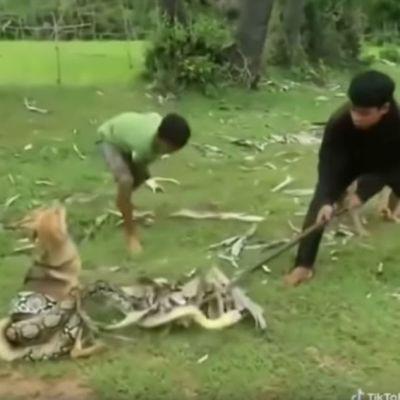 Video: Niños rescatan a perrito de una serpiente con piedras y palos