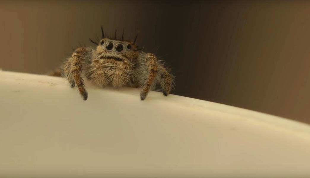 Leche Araña Insólito Caso Crías Mamíferos