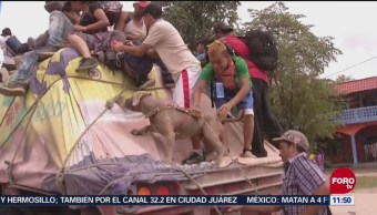 Bolillo Perro Migrante Acompaña A La Caravana Rumbo A Estados Unidos
