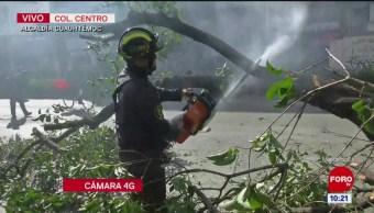 Cae árbol en la calle Ayuntamiento de la CDMX