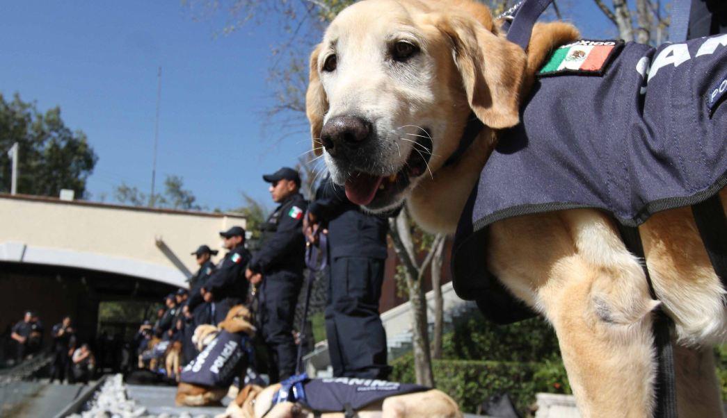 Perros policía jubilados disponibles para adopción