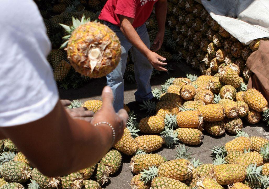 Costa Rica es uno de los principales países exportadores de Piña en el mundo (AP Images Archivo)