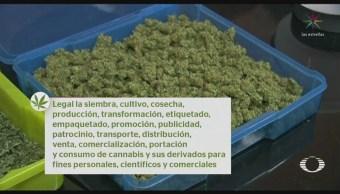 Presentarán Iniciativa Ley Para Regulación Marihuana