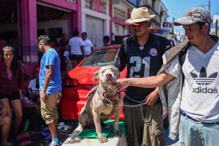 Bolillo, el perro migrante que acompaña a la caravana