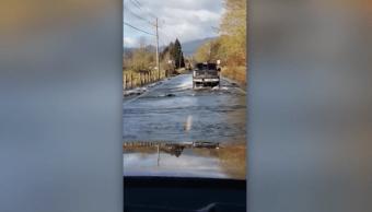 grupo-salmones-cruza-carretera-washington-lluvias-fuertes
