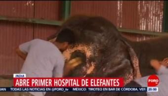 Inauguran Primer Hospital En India Primer Hospital Para Elefantes Río Yamuna Ong Wildlife Sos