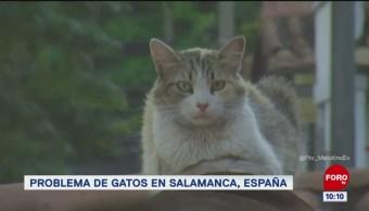 #LoQueVimosEnLaRed: Problema de gatos en Salamanca