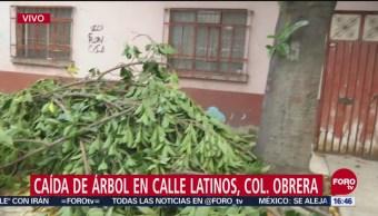 Reporten caída de árbol en Benito Juárez