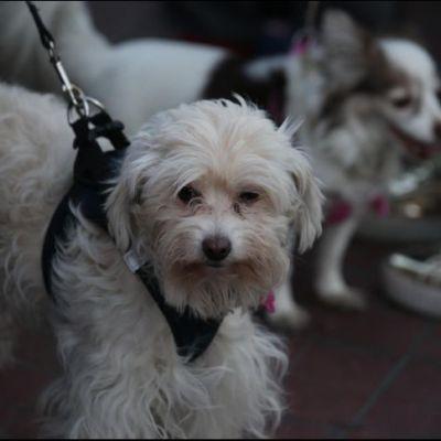 SCJN avala IVA en alimento para mascotas