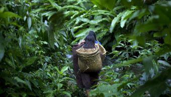 Por qué un centenar de tribus prefieren el aislamiento