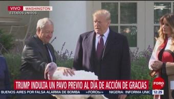 Trump indulta a un pavo, previo a Acción de Gracias