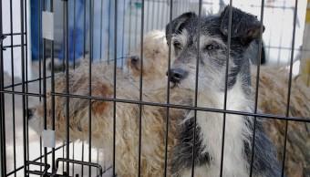 Ingeniero crea movimiento para cuidar perros callejeros