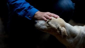Video: Rescatan perro que fue enterrado vivo