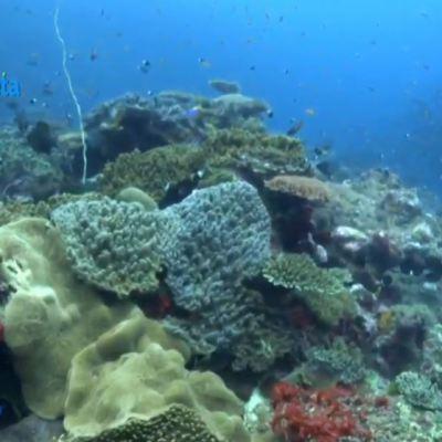 Arrecifes de coral y manglares, maravilla de los 'jardines del mar' de isla Vamizi