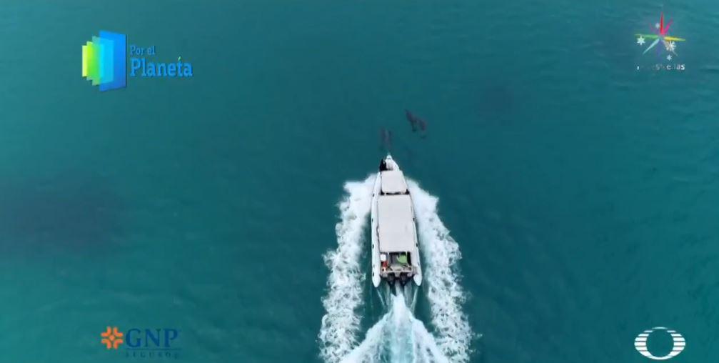 Ballenas jorobadas, gigantes que habitan los jardines del mar