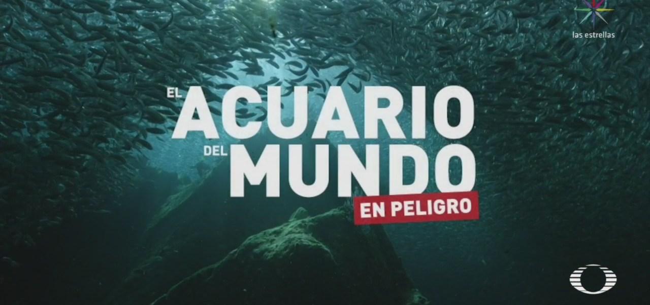 Acuario Del Mundo En Peligro Próximamente Noticieros Televisa