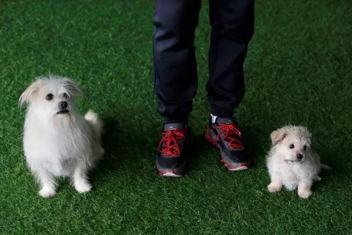China: Servicio de clonación duplica al famoso perro Zumo