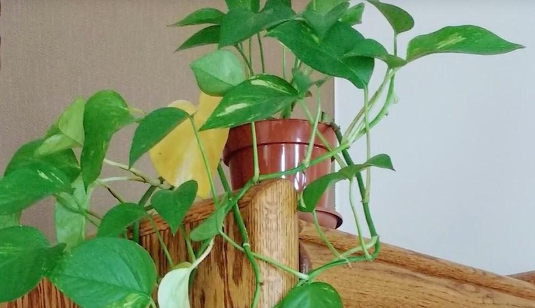 desarrollan planta capaz de purificar el aire del hogar