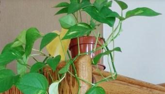 Desarrollan Planta Purifica Aire Cloroformo Benceno