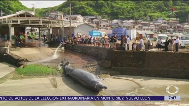 Japón reanudará la cacería de ballenas