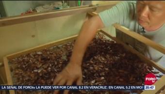 China Procesan Basura Con Cucarachas Ecología
