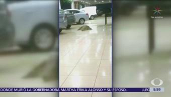 Cocodrilo aparece en agencia de carros en Puerto Vallarta, Jalisco