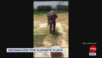 #LoQueVimosEnLaRed: Indignación por elefante flaco