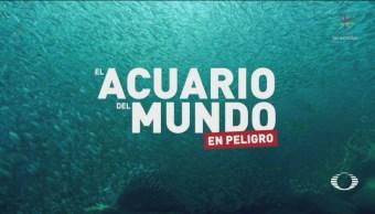 Nico Ibargüen Presenta Investigación Mar De Cortes