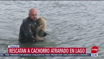 Rescatan a cachorro atrapado en lago en Turquía