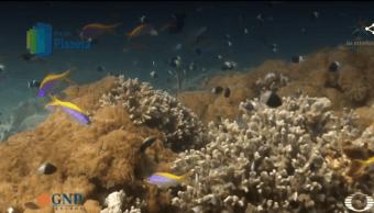 Isla Vamizi, donde florecen los jardines del mar