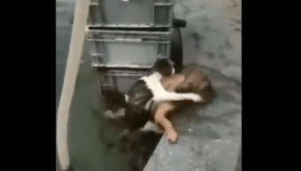 Video Perrito Salva Gato Morir Ahogado