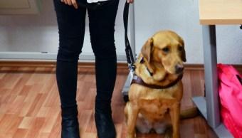 Perro guía se titula en la Facultad de Filosofía de la UNAM