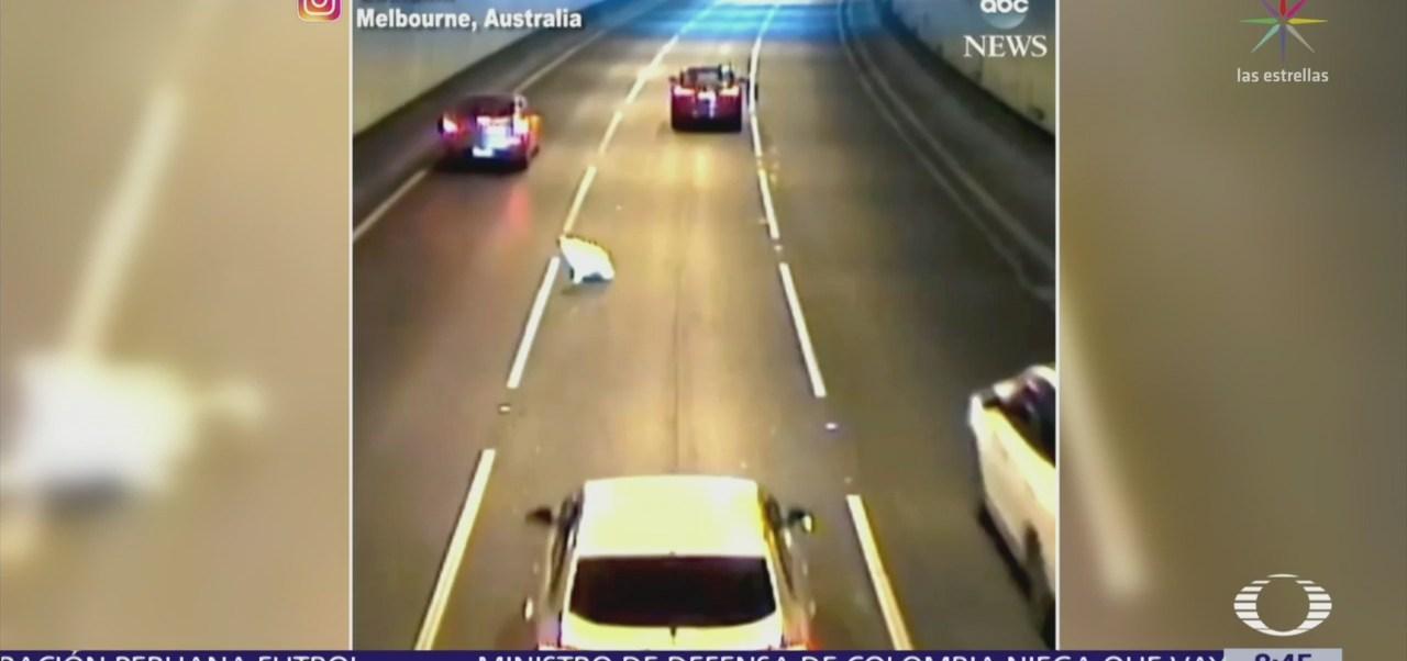 Perro salta por ventanilla de automóvil en marcha