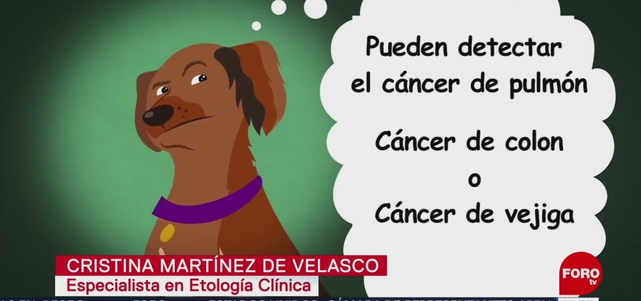 Perros son capaces de detectar enfermedades