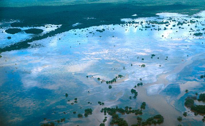 Ecología Campeche; incendios devastan manglares Los Petenes